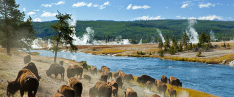 Yellowstone-National-Park-6130056